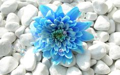 Flower Wallpaper Android Apps on Google Play