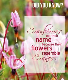 Did you know cranberries got their name because their flowers resemble cranes?