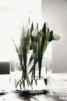 Spring flowers / White Tulips in a Double Vase