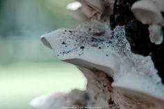 (c) 2010 - NATURE  NIKON D70 - Nikkor 18-70mm ______ #nature #naturelover #naturelovers #naturephotography #natureza #naturegram #natureshots #naturephoto #naturebeauty #photography #photographer #beautifull #park #parque #jardim #garden #fotografia #fotografo #ronaldoichi #摄影 #色彩 #カメラマン #フォトグラフィー #写真 #自然 #植物