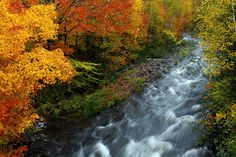Agawa Canyon - The beauty of fall! Sault Ste Marie, Travel English, Train Tour, Autumn Scenery, Beautiful Lines, Landscape Photos, Waterfalls, The Great Outdoors, Ontario