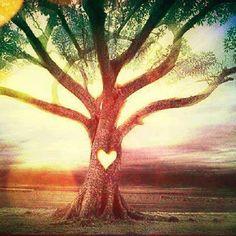 <3 Meditação da Árvore Sagrada <3