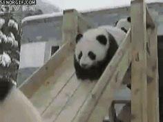 Just pandas on a slide.