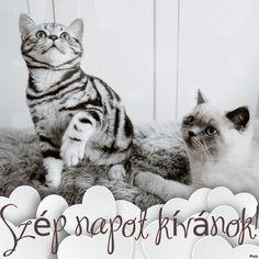 Ikon, Templates, Cats, Animals, Models, Gatos, Animales, Stenciling, Animaux