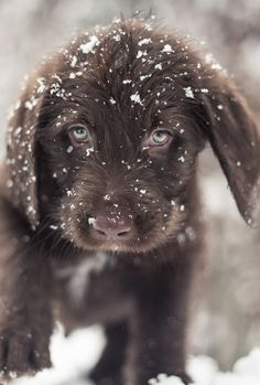 I just luv playing in the winter snow, its so much fun...