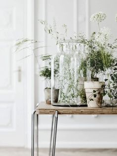 Add some House plants to your next home design project. Lovely table with a number of different potted plants and includes a beautiful terrarium too. Love those plants. Decor, Home And Garden, Interior, Interior Inspiration, Home, Green Plants, Fredericia Furniture, Indoor, Indoor Plants