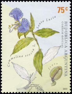 Santa Lucia (Commelina erecta)
