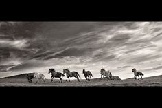 Rouge et Noir a Badem Ciflik: Charles Caleb Colton / Quote - Fear Black White Photos, Black And White, Cliffs Of Moher, Running Horses, White Horses, New Journey, Horse Photography, Horse Head, Horses