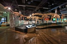 Dinosaur skeleton exhibit - Melbourne Museum