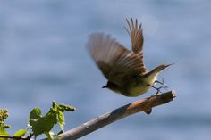 bird taking flight - Google Search