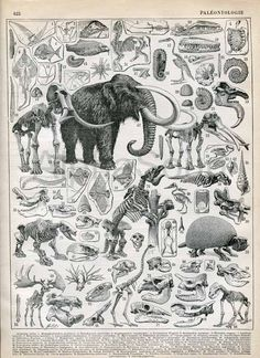 Paleontology Dinosaurs Prehistoric Wooly Mamouth 1898-1904 Antique French Engraving Print
