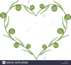 Stock Vector - Love Concept, Illustration of Fresh Green Fiddlehead Ferns Forming in A Beautiful Heart Shape Isolated on White Background Fresh Green, Ferns, Heart Shapes, Concept, Invitations, Watercolor, Stock Photos, Illustration, Silver