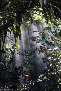 """forest near botanical garden     Buy, """"The Backpacker's Field Manual""""    http://amzn.to/X2bOjJ"""