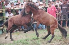 I just signed the petition to stop cruel horse fights at Shop For Your Cause. Please sign and help us make this change.