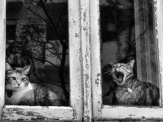 Take me off! | Take me off! 'On Black | Rui Palha | Flickr