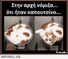 Funny Images, Funny Photos, Lovely Creatures, Funny Moments, Lol, Jokes, Humor, Caricatures, Animals