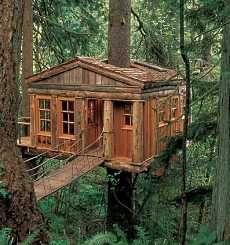 log tree house