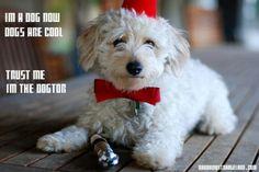 .Dogtor Who.