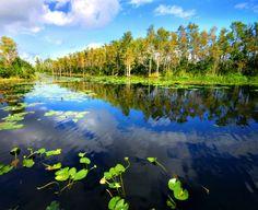 Okeefenokee Swamp, Georgia