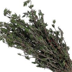 rubbing the bruised leaves on your skin to repel mosquitoes. Before coating yourself with lemon thyme, Tucker recommends testing your tolerance first by making repeated applications to a small patch on your forearm for one to two days.