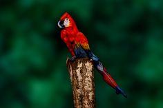 parrot or no parrot? :)