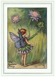 The Scabious Fairy, by (CMB) Cicely Mary Barker