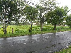 50 are jalan utama Ubud Bali
