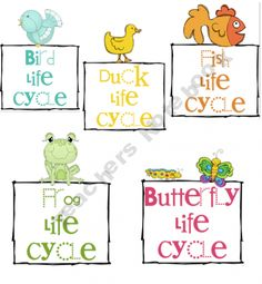 Life Cycles of bird, duck, fish, frog, butterfly - 2nd-4th grade level