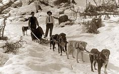 Google Image Result for http://www.old-picture.com/american-adventure/pictures/Dog-Sled-Team.jpg
