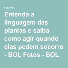 Entenda a linguagem das plantas e saiba como agir quando elas pedem socorro - BOL Fotos - BOL Fotos