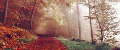 Bad Pyrmont, Deutschland by Photographer Sebastian Unrau looks like my road on a foggy morningplaces Samhain, Wallpaper S8, Nature Wallpaper, Forest Wallpaper, Wallpapers En Hd, Photos Free, Free Pictures, Free Images, Amazing Inspirational Quotes