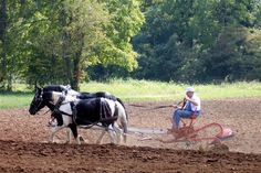 Plow day at Warren Wilson College near our home for sale, 11 Outlook Circle, Swannanoa NC. http://www.myashevillehomeforsale.com/