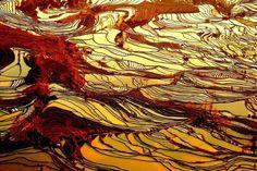 Tramonto sulle risaie dello Yunnan in Cina