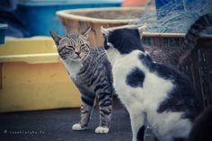Nekoland, une vie de chat au Japon - Editions Issekinicho / Sur l'île de Tahirojima