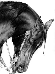 Pencil Drawing Patterns Star of the West by Define-X - Horse Pencil Drawing, Horse Drawings, Cool Drawings, Pencil Drawings, Horse Artwork, Horse Portrait, Cowboy Art, Equine Art, Wildlife Art