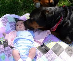 JUST LOOK AT THIS INSANITY!!!!!!!!! | 31 Reasons Rottweilers Are The Absolute Worst