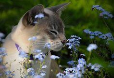 Beautiful Kitty!!!!❤️ kitties!!!