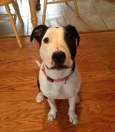 #AdoptARMANI Sweet 1YR #dog looking 4 a loving home! Saved by #furfriendsInNeed Total cutie!  https://www.facebook.com/fostermeadoptmeloveme/photos/a.738260639577496.1073741841.732883636781863/738260649577495/?type=1&theater…