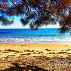 https://flic.kr/p/Ad1kAi | Shelly Beach through the she-oaks :) #upsticksandgo #greensbeach #shellybeach #sheoak #tasmania #tassie #instatassie #tassiebeaches #michfrost #travel #lifeisabeach #instagood #instabeach #instatravel