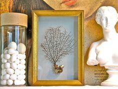 Sea Fan Shadow Box by specimenboxshop on Etsy, $145.00