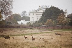 Go to Richmond park when you have the time. A great place to escape from whatever.