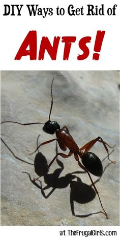 "Got ants??  Check out these DIY Ways to Get Rid of Ants ~ shared by your frugal friends on The Frugal Girls Facebook Page! Carol said: ""My husband put baby powder on our back porch to get rid of th..."