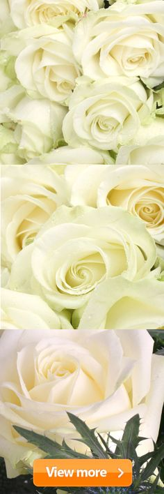#white #roses from serenataflowers.com with FREE UK next day delivery