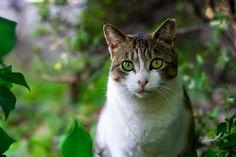👌 New free photo at Avopix.com - Animal cat asia symbol    📷 https://avopix.com/photo/42979-animal-cat-asia-symbol    #cat #feline #animal #kitten #domestic cat #avopix #free #photos #public #domain