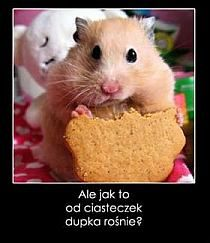 What do hamsters eat? ~ Hamster Care and Advice Cute Baby Animals, Animals And Pets, Funny Animals, Small Animals, Animals Images, Cute Photos, Cute Pictures, Happy Photos, Bear Hamster