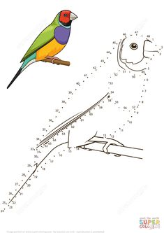 Dibujo de Pinzón Gouldian para colorear   Unir puntos imprimir gratis Printable Handwriting Worksheets, Dot To Dot Puzzles, Coloring Books, Coloring Pages, English Teaching Materials, Drawing Sketches, Drawings, Bird Crafts, Stained Glass Patterns