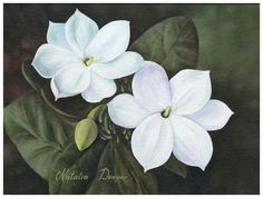 Arabian Jasmine- Philippines national flower, I want this as my next tattoo and i will be getting this for my mom who is from the Philippines :)