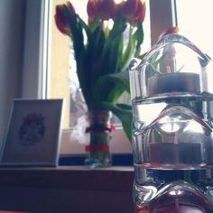 #flowers #nice #cat #atmosphere