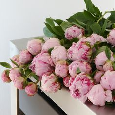 Peoner All Pictures, Peonies, Floral Wreath, Wreaths, Rose, Flowers, Plants, Gardening, Art