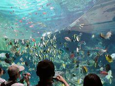 Qingdao Top Attractions-Qingdao Underwater World Qingdao, Underwater World, Attraction, China, Top, Travel, Painting, Viajes, Painting Art